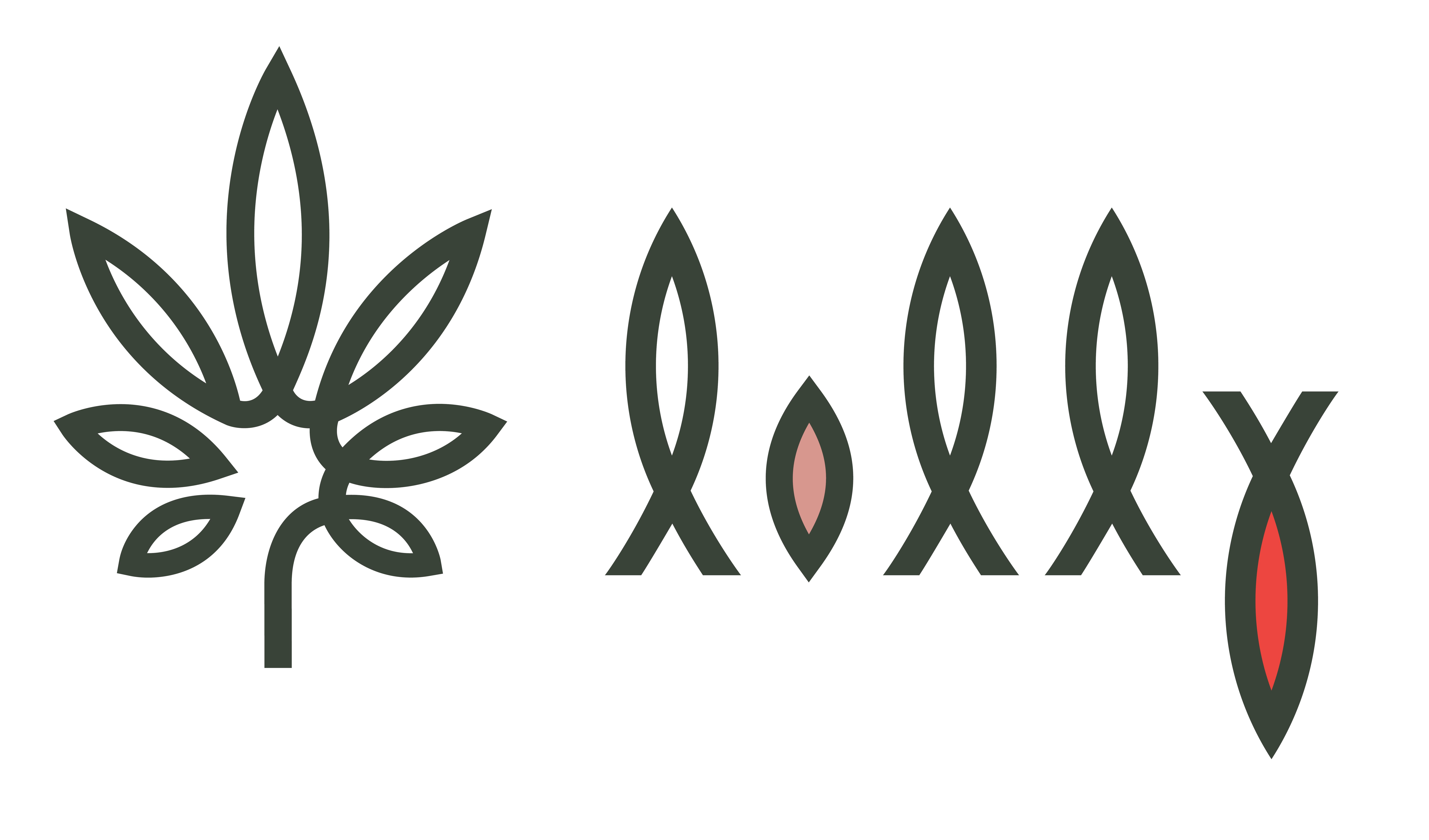 Lolly Cannabis