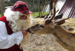 This sweet dear was rescued by Killman Zoo and befriended by Santa!